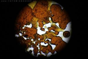 zdjecia-mikroskopowe-fotografia-mikroskopowa-06