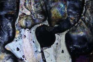 zdjecia-mikroskopowe-fotografia-mikroskopowa-22