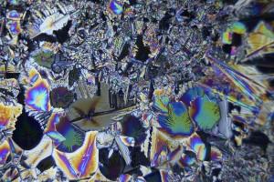 zdjecia-mikroskopowe-fotografia-mikroskopowa-35