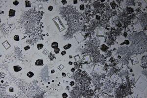 zdjecia-mikroskopowe-fotografia-mikroskopowa-43