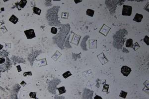 zdjecia-mikroskopowe-fotografia-mikroskopowa-44