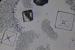 zdjecia-mikroskopowe-fotografia-mikroskopowa-49