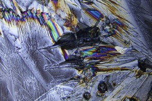 zdjecia-mikroskopowe-fotografia-mikroskopowa-53